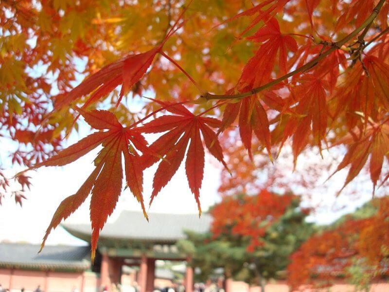 Tại sao mùa Thu ở Hàn Quốc lại thu hút khách du lịch đến vậy?