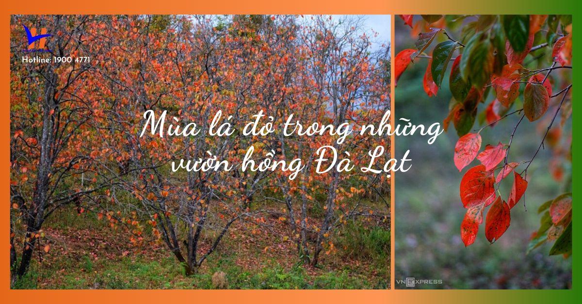 Vườn hồng Đà Lạt vào mùa lá đỏ đẹp nức lòng du khách