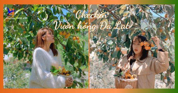 Vườn hồng Đà Lạt vào mùa chín đỏ hút giới trẻ check-in