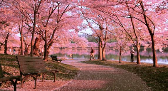 Các loại visa Nhật Bản – Những điều cần biết khi xin visa Nhật Bản